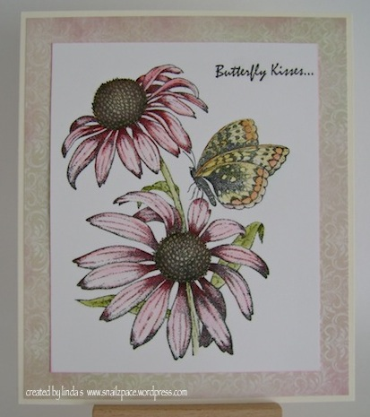 pink coneflowers with orange butterfly and butterfly kisses sentiment