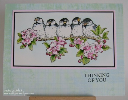 chickadees on branch with pink blossoms