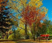 photo of fall trees in a park with a red bench and fallen leaves on the ground