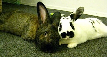 two bunnies being cozy