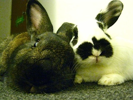 close up of two bunnies being cozy