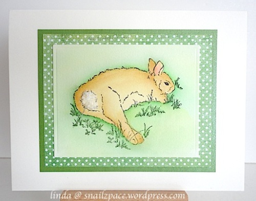 Impression Obsession Resting Rabbit