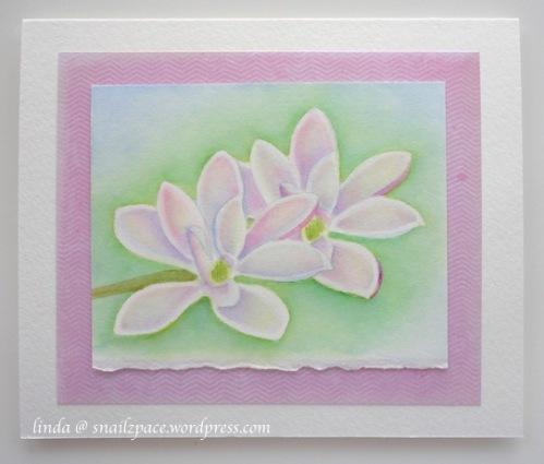 altenew.magnolia