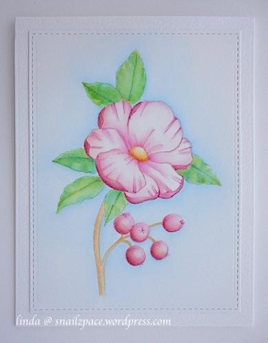 copyright linda @ snailzpace.wordpress.com magenta wild rose